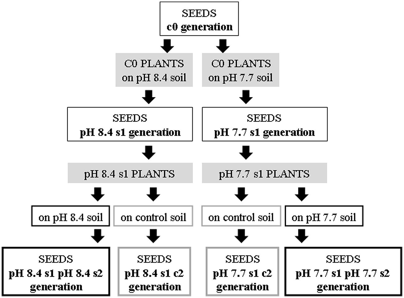 Frontiers Analysis Of The Transgenerational Iron Deficiency Stress Voice Changer Circuit