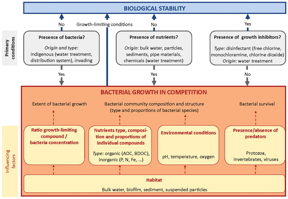 Frontiers | Biological Stability of Drinking Water