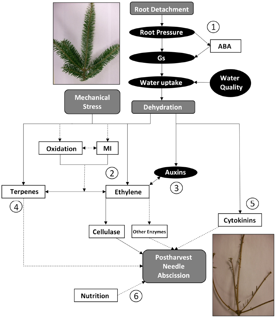 Frontiers understanding the physiology of postharvest needle frontiersin ccuart