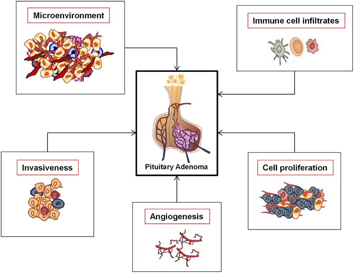 Recent advances in diagnosis and treatment of pituitary tumors.