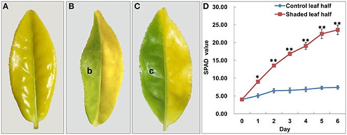 Frontiers De Novo Sequencing Of The Leaf Transcriptome Reveals