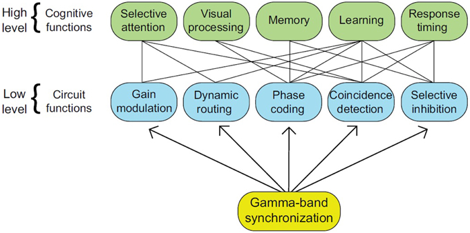 Frontiers | The brain dynamics of linguistic computation | Psychology