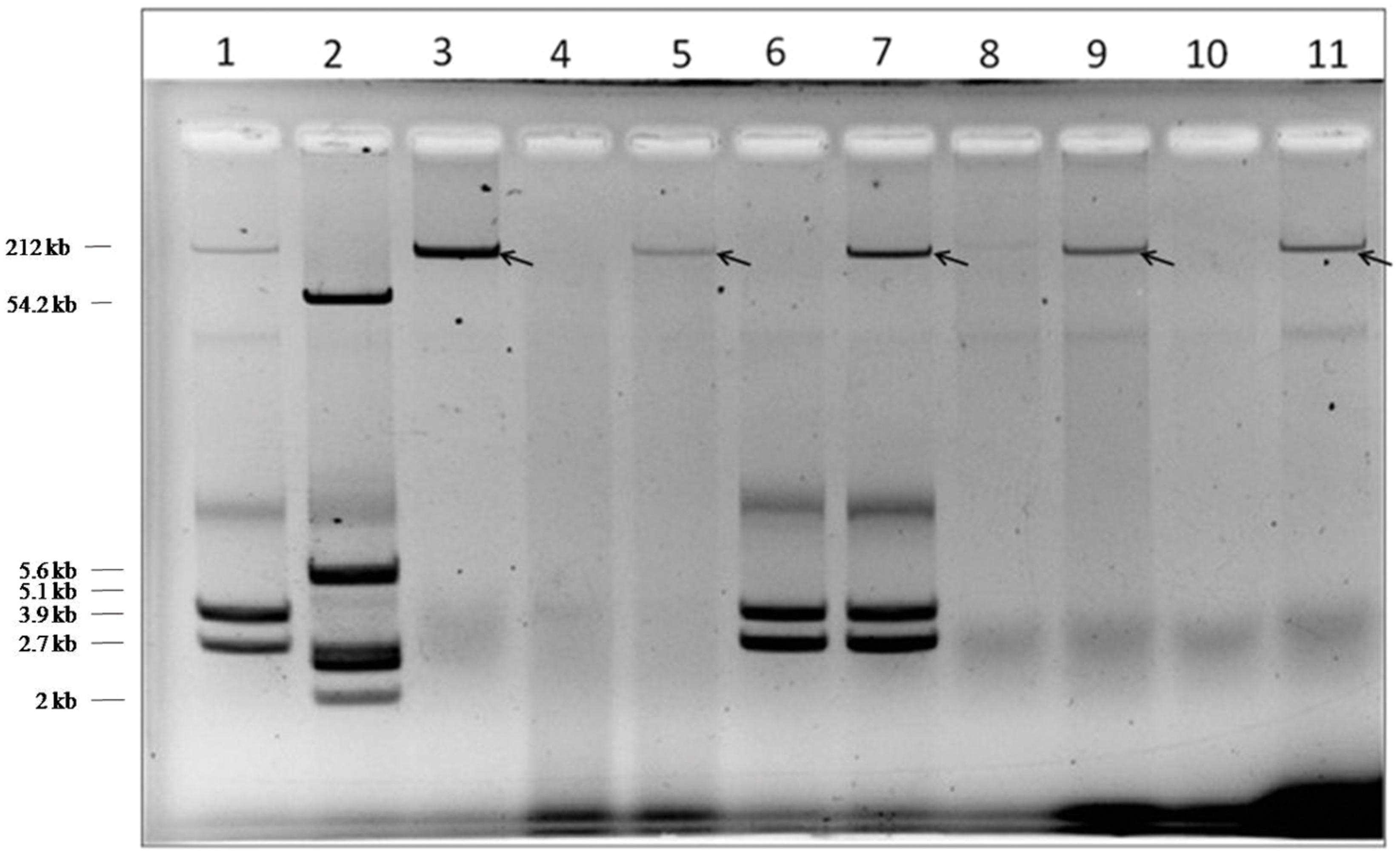 Frontiers | Attributes of carbapenemase encoding conjugative plasmid