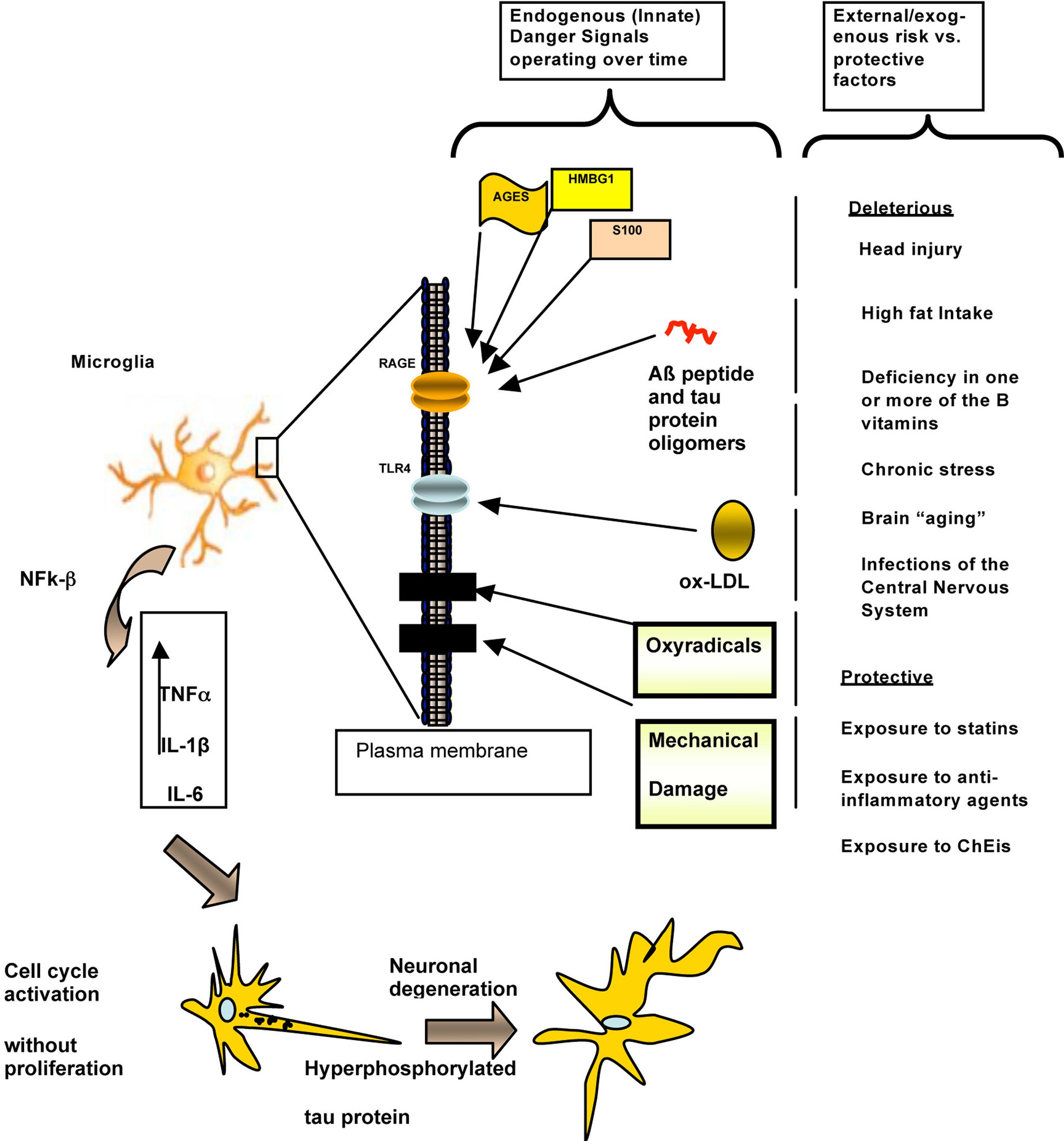 frontiers integrative understanding of emergent brain