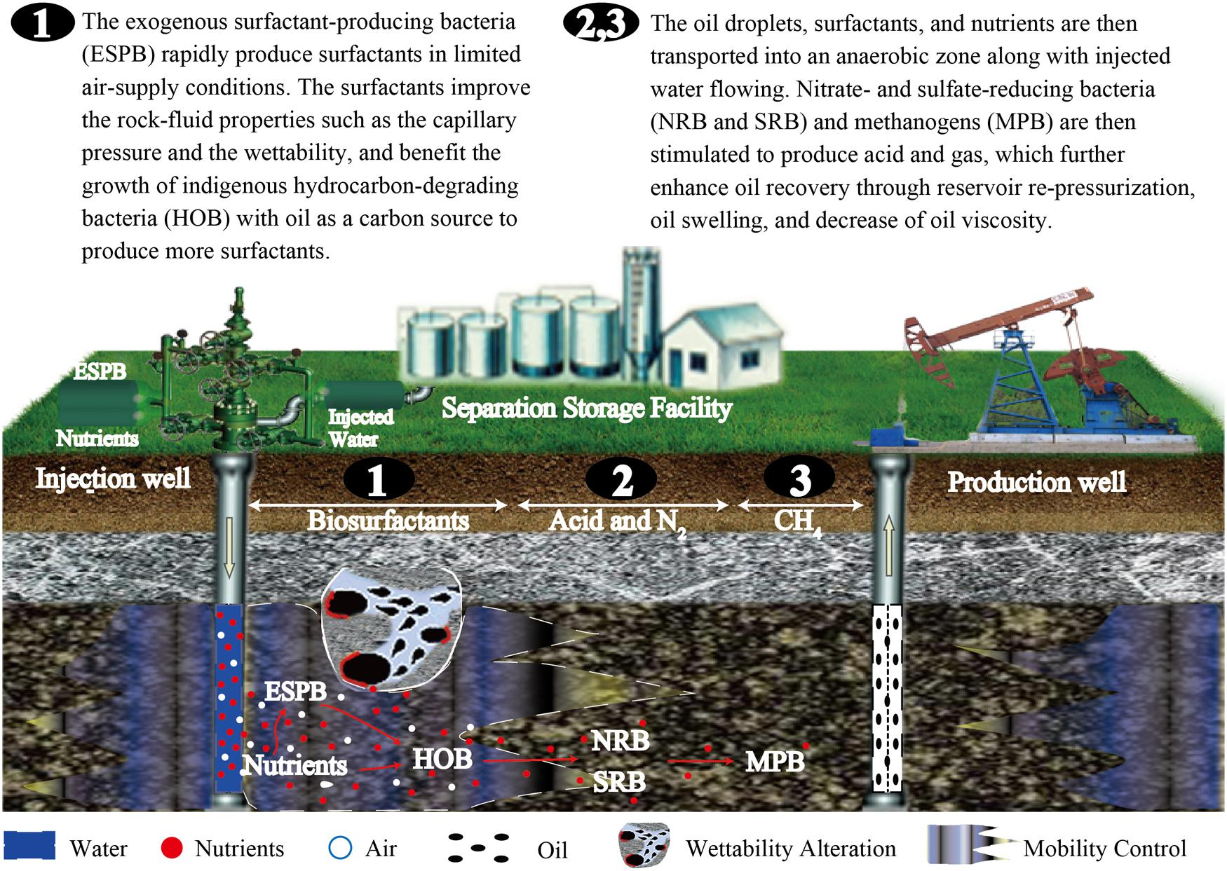 oil degrading bacteria history of and processes Molecular understanding on microbial degradation of macondo Ø oil-degrading bacteria have the ability to weathering processes to transform petroleum.