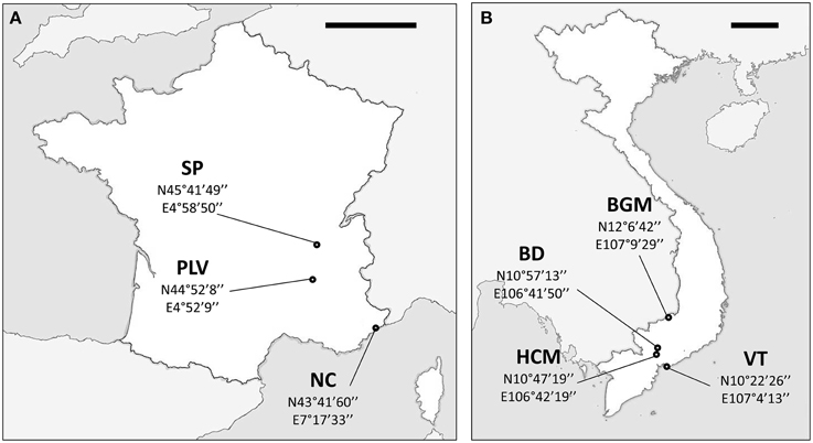 Frontiers | French invasive Asian tiger mosquito populations