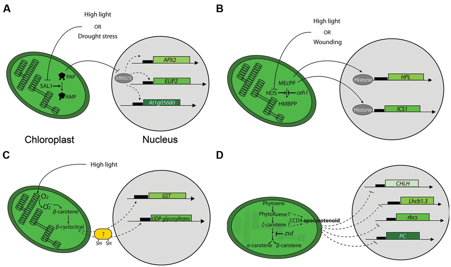 Frontiers chloroplast signaling within between and beyond cells frontiersin ccuart Gallery