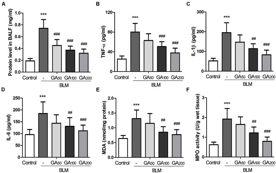 Frontiers | Glycyrrhizic acid alleviates bleomycin-induced pulmonary