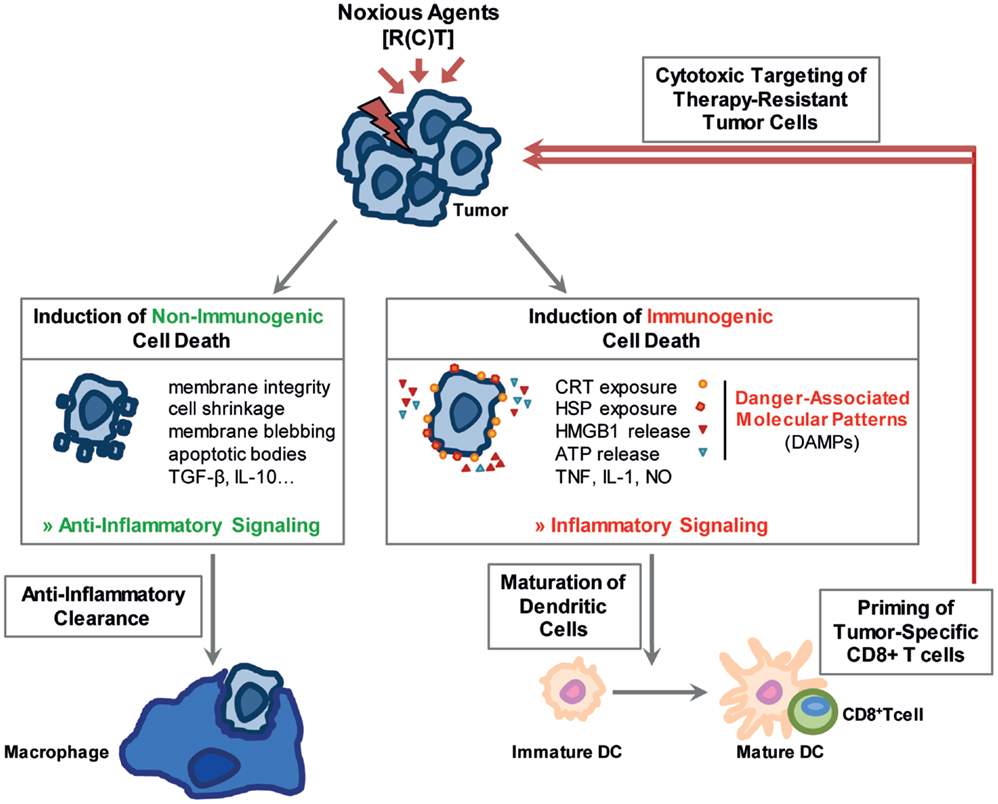 Frontiers | Radio-Immunotherapy-Induced Immunogenic Cancer