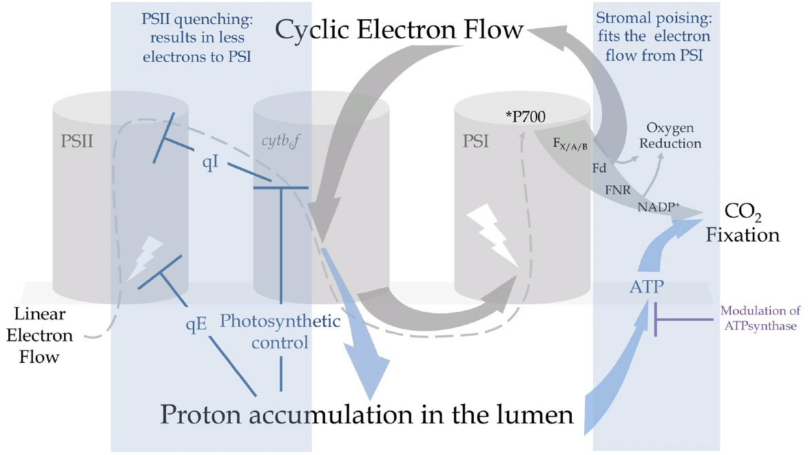oxygen reduction reaction thesis Catalysts for the oxygen reduction reaction the fundamental reaction occurring inside a fuel cell is the oxygen reduction reaction (orr), where oxygen and hydrogen are forming water the critical challenge for improving fuel cells is making an advancement in the catalyst for orr.