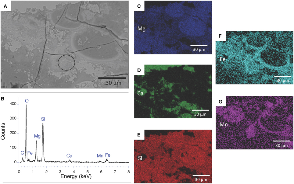 Frontiers   Formation of low-T hydrated silicates in modern