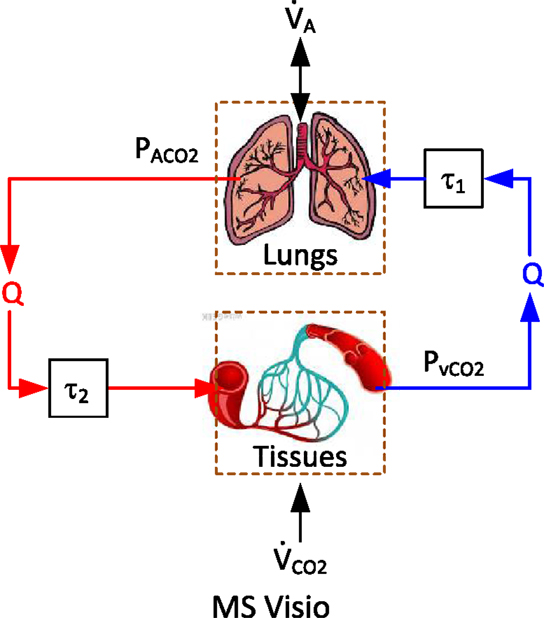 Frontiers a comparative data based modeling study on respiratory frontiersin ccuart Gallery