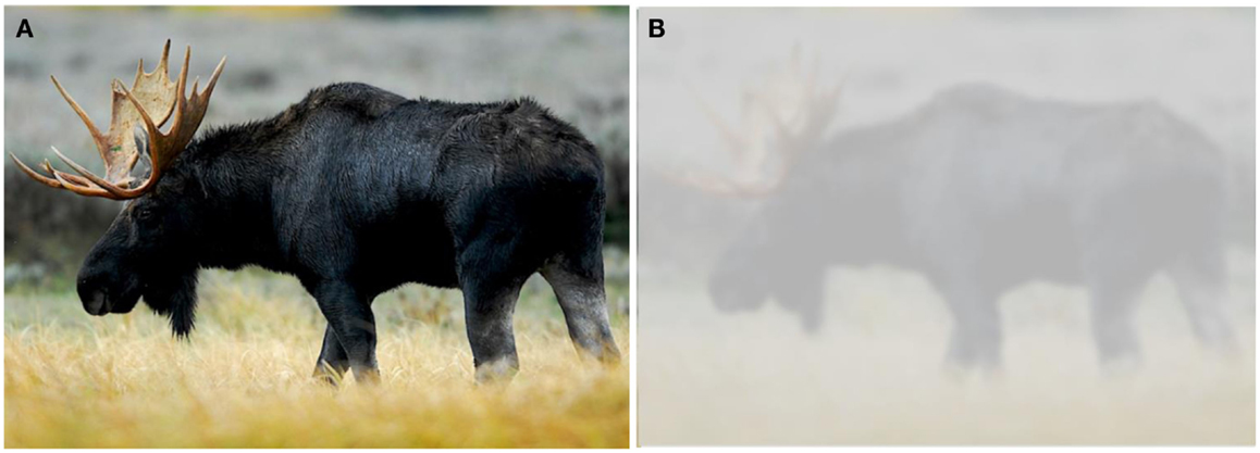 "Figure 3 - When you read the sentence, ""Through the fogged goggles, the ranger could hardly identify the moose,"" which picture is closer to how you imagined it, (A) or (B)?"