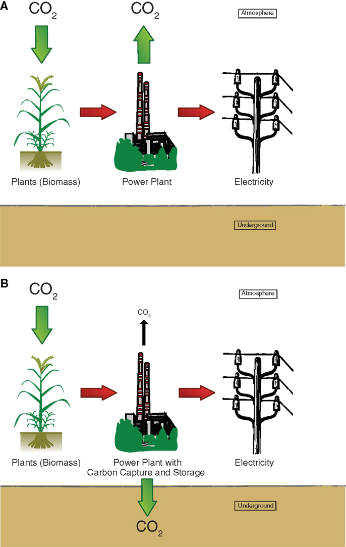 Figure 2 - Diagram of A. a bioenergy power plant, and B. a bioenergy with carbon capture and sequestration (BECCS) power plant. Plants remove CO2 from the atmosphere while growing. If we harvest the biomass and burn it in a power plant we can generate electricity. With BECCS, we do not release all the CO2 into the atmosphere, but we separate the CO2 (capture) and store it underground (sequestration).