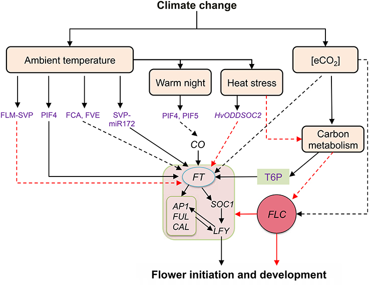 Frontiers | Implications of High Temperature and Elevated CO2 on