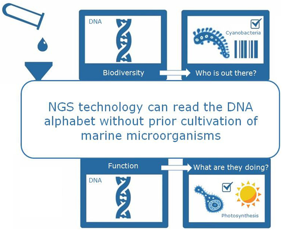 "Figure 2 - Next generation sequencing (NGS) technology is a powerful tool. It allows scientists to rapidly read the DNA from millions of microbes without prior culture in the lab. Microbial DNA is obtained from marine microbes in the ocean water samples and can be read using the NGS method. The DNA, as the ""blueprint"" of the microbial cell, contains all the information we need to answer questions such as ""Which microbes are out there?"" (Biodiversity) and ""What are those microbes doing"" (Function)."