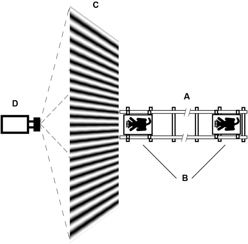 Projector Natural Light