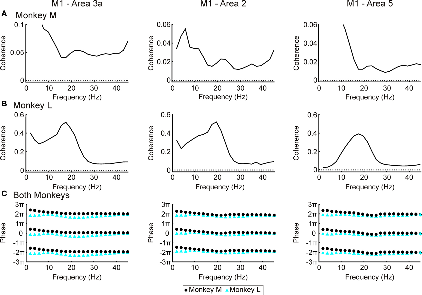 relationship between somatosensory cortex and motor