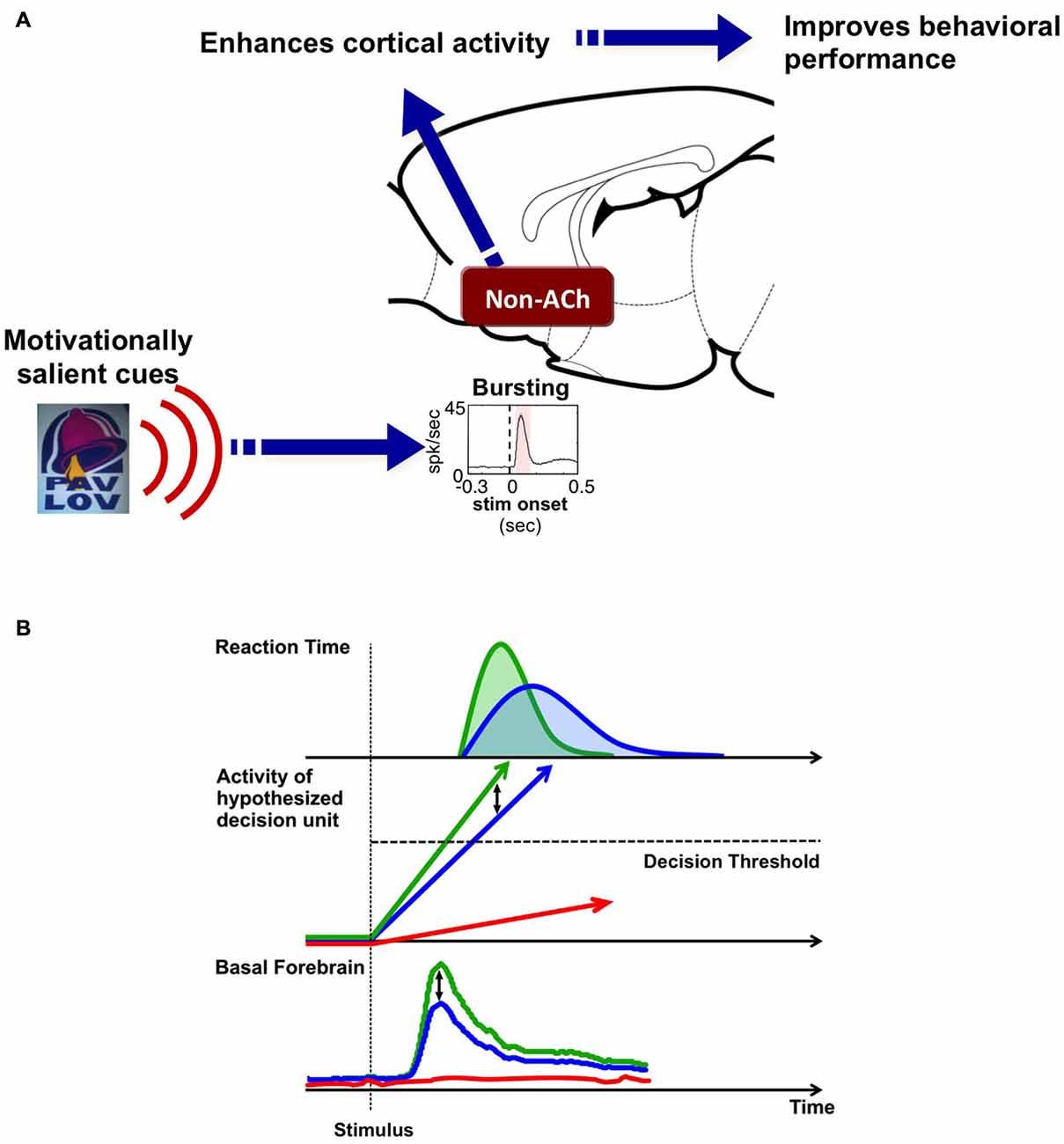 Frontiers | Basal forebrain motivational salience signal enhances ...