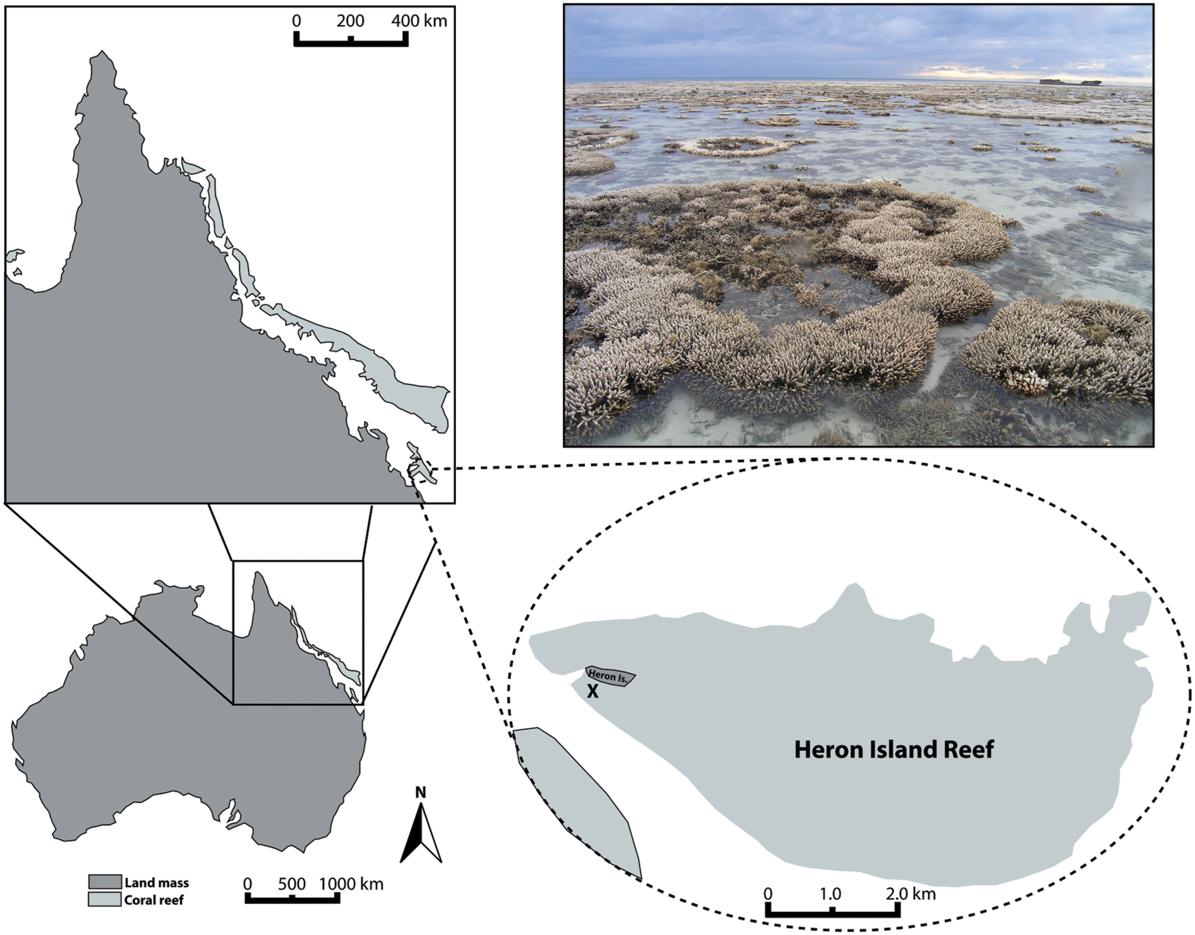 Frontiers | Viral Outbreak in Corals Associated with an In Situ