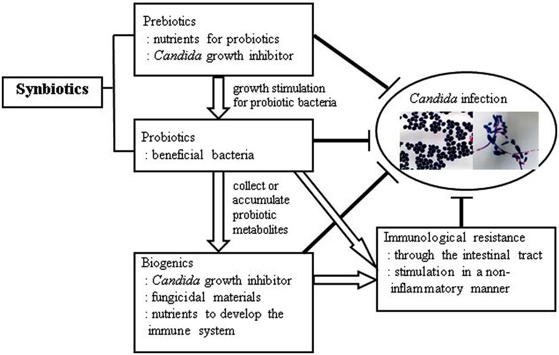 Probiotics for oral candida