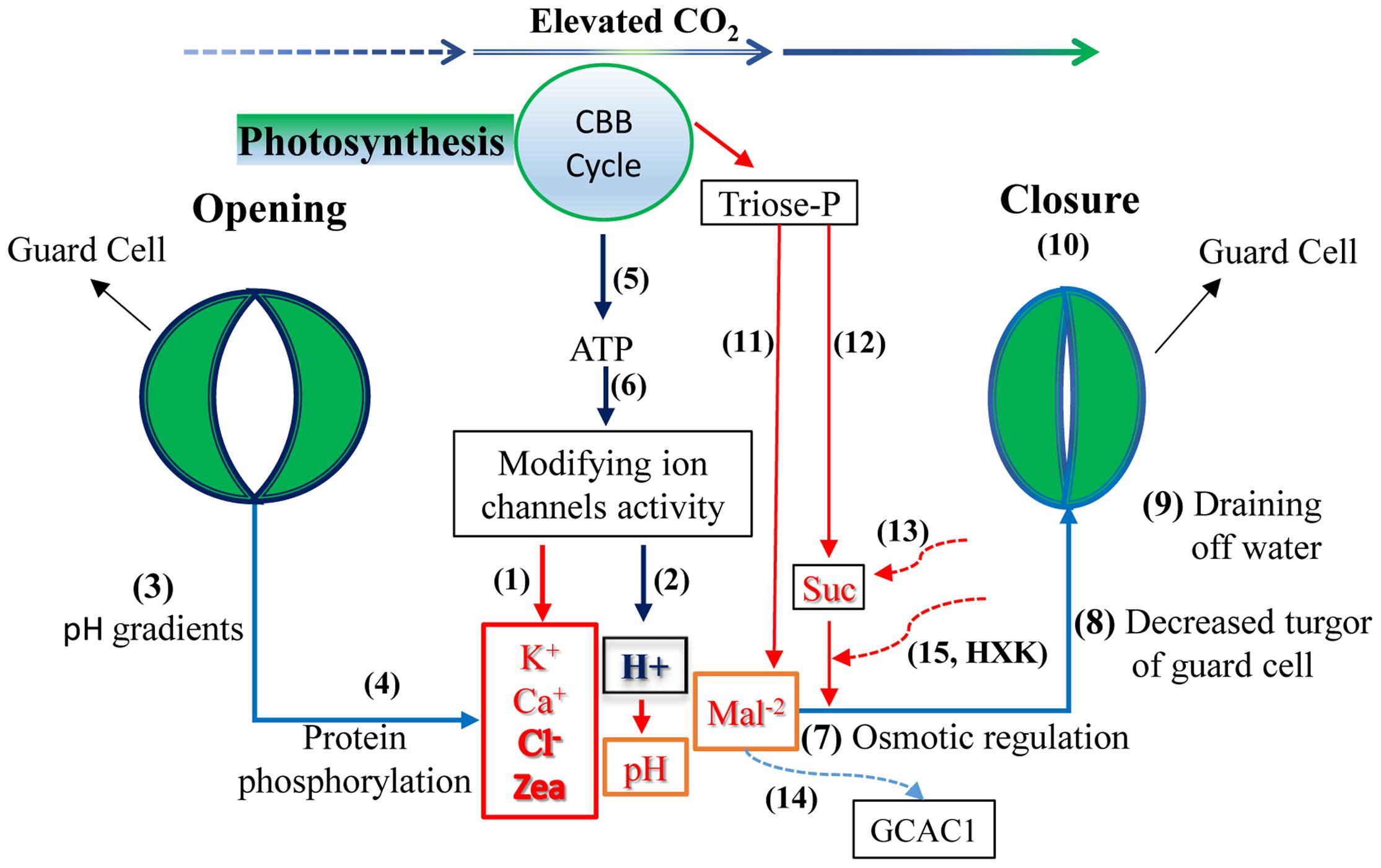 heat tolerance in plants an overview pdf