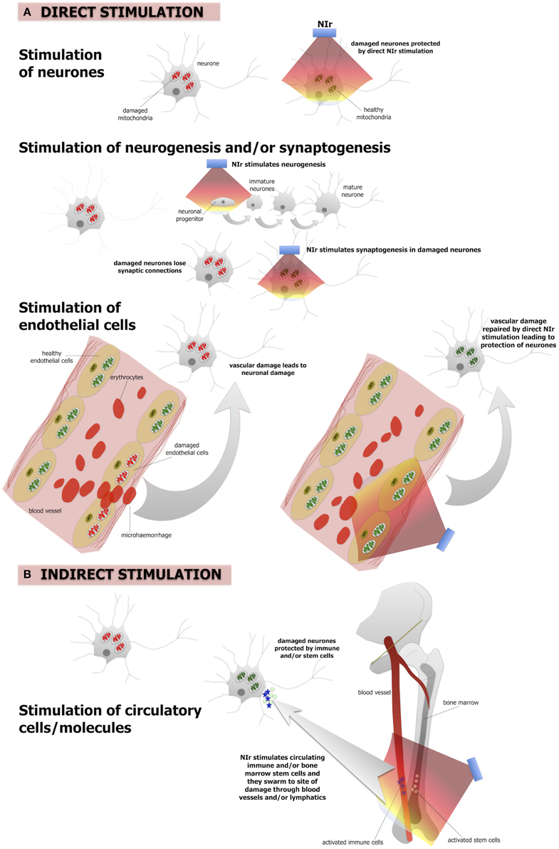 Frontiers Turning On Lights To Stop Neurodegeneration