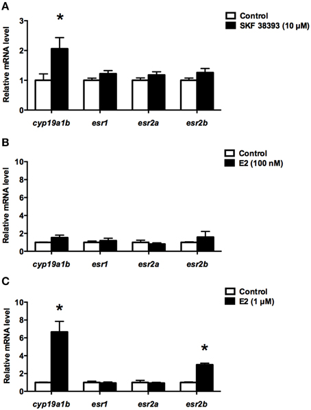 Login usingYou can login by using one of your existing accounts.                                                            Frontiers in Neuroscience                                                    Direct Regulation of Aromatase B Expression by 17β-Estradiol and Dopamine D1 Receptor Agonist in Adult Radial Glial Cells
