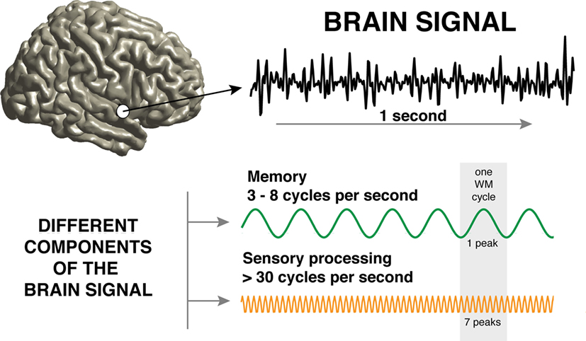 Figure 1 - Recording from a human brain: the brain signal (top) looks noisy and random.