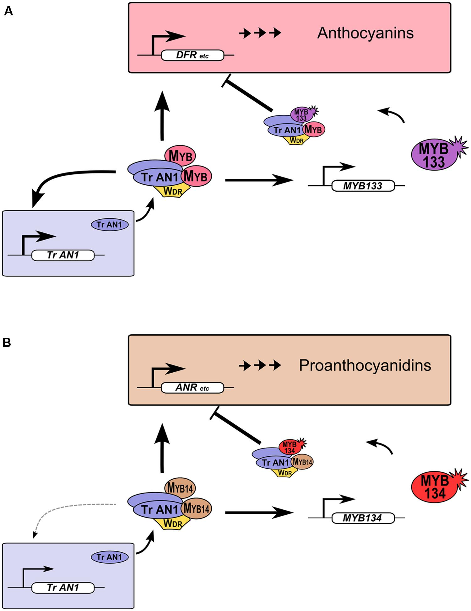 biosynthesis of plant steroid glycosides
