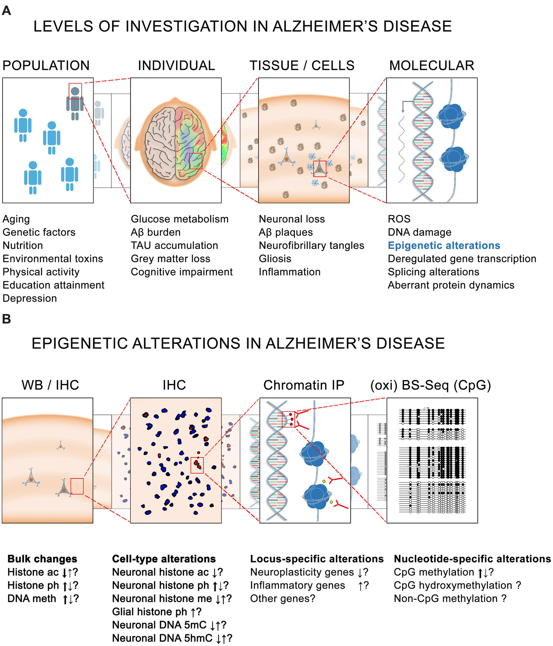 frontiers | epigenetic alterations in alzheimer's disease