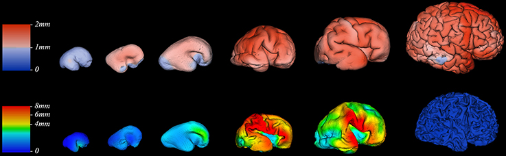 prenatal brain development prenatal lifecycle Review prenatal stress and brain development arnaud charila,b, david p laplanteb, cathy vaillancourtc, suzanne kinga,b,⁎ amcgill university, department of psychiatry, montreal, québec, canada.