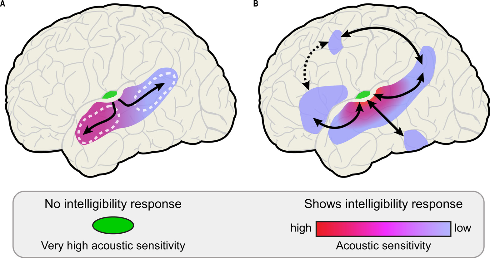Frontiers | Hierarchical processing for speech in human ...