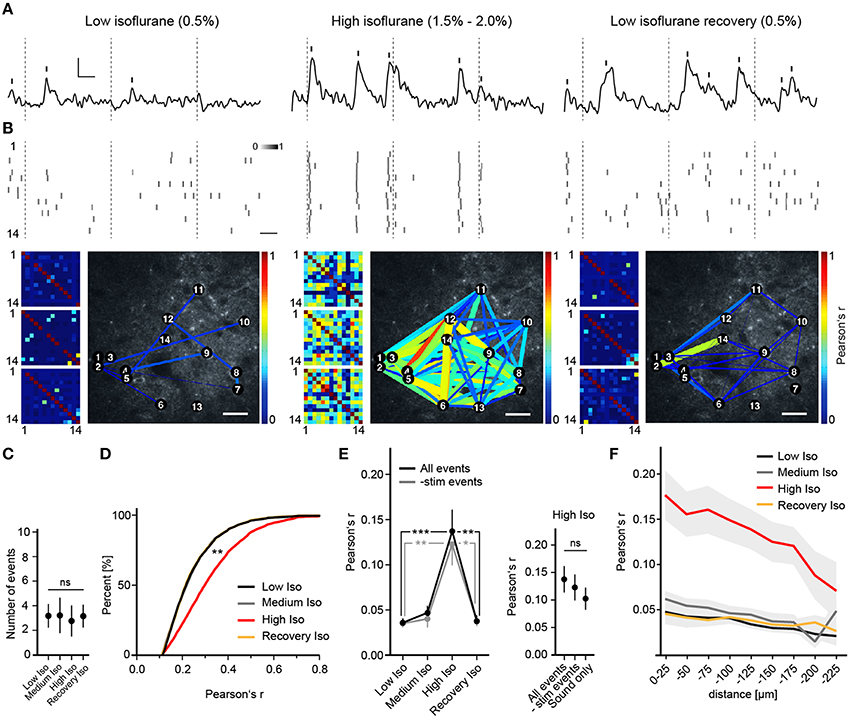 Frontiers | General Anesthetic Conditions Induce Network Synchrony