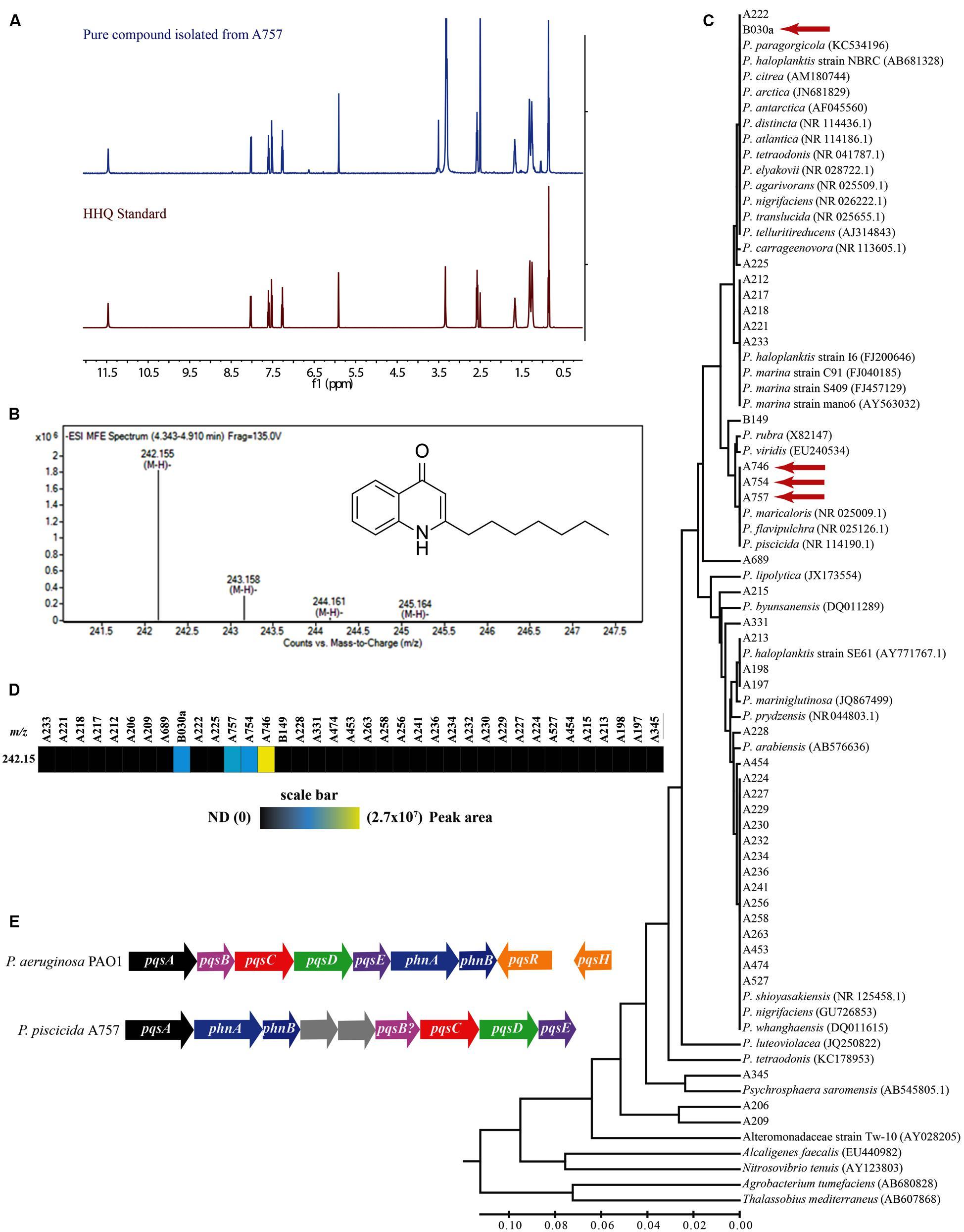 Frontiers a bacterial quorum sensing precursor induces mortality frontiersin nvjuhfo Gallery