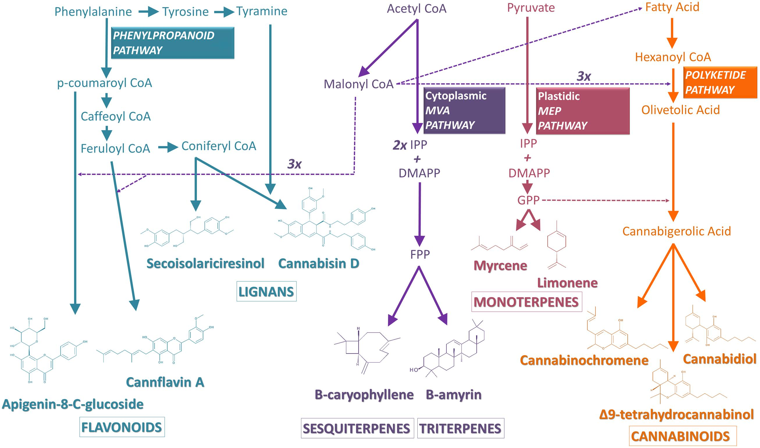 Frontiers | Cannabis sativa: The Plant of the Thousand and One
