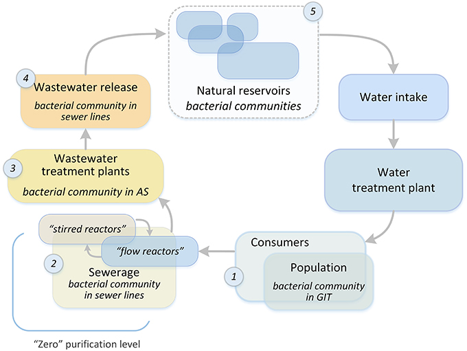 Frontiers | Microbial Community Structure of Activated