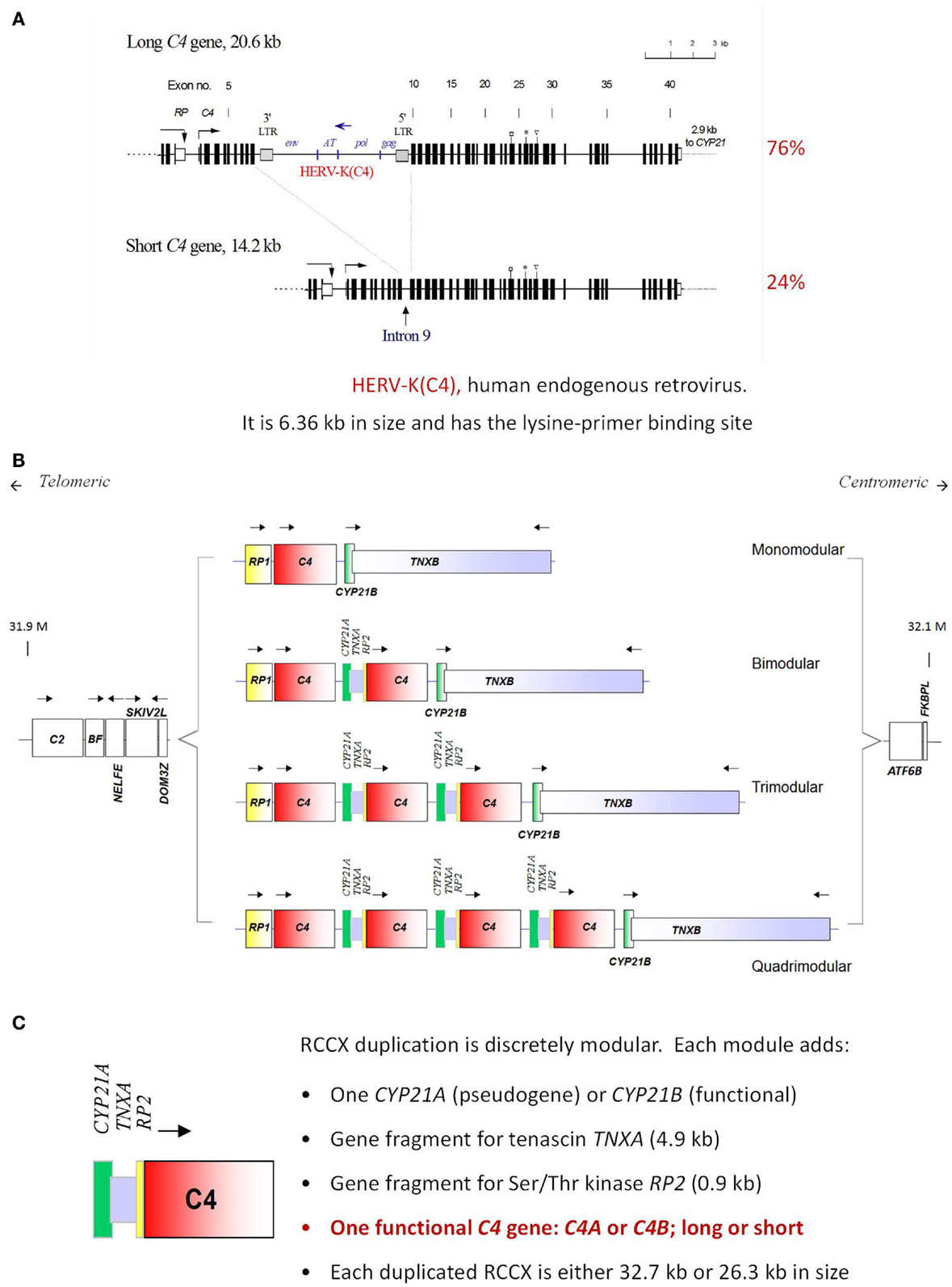 Frontiers | Early Components of the Complement Classical