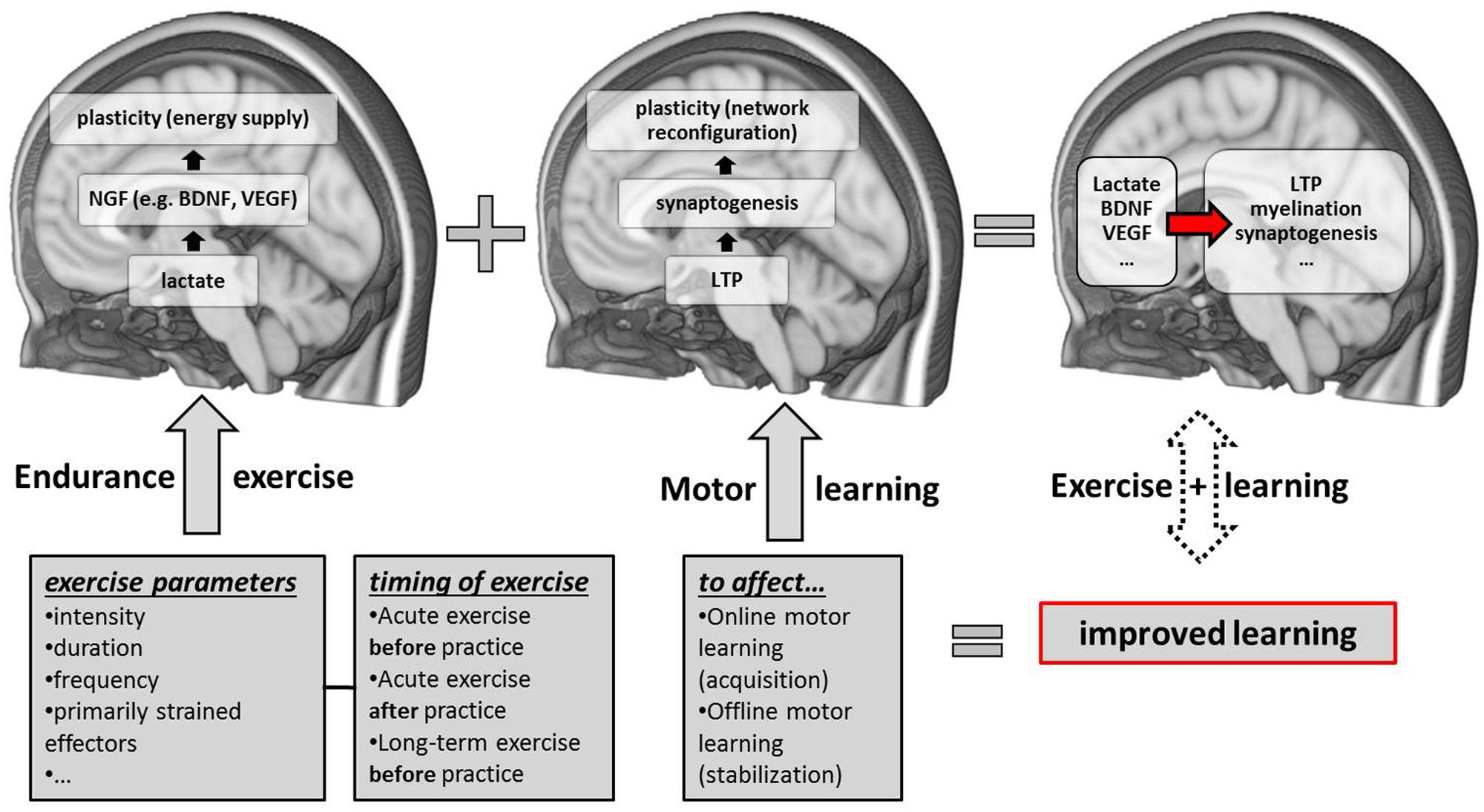 A motor learning behavioral and emphasis pdf control