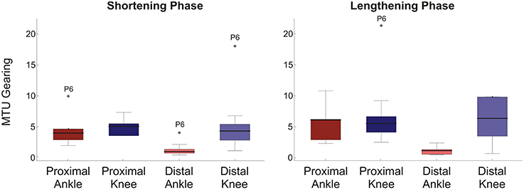Frontiers | Passive Muscle-Tendon Unit Gearing Is Joint Dependent in