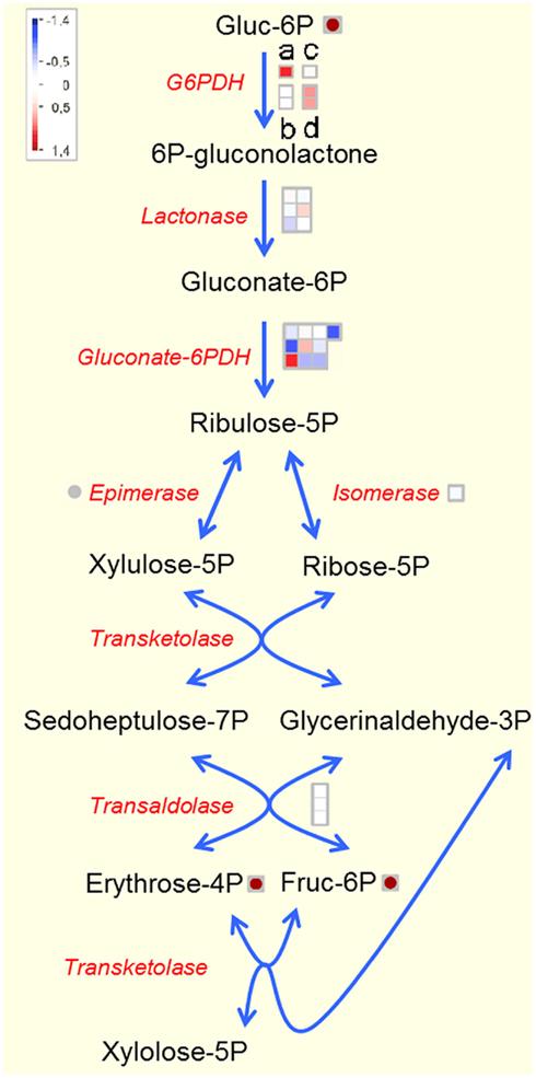 Oxide Nanowires