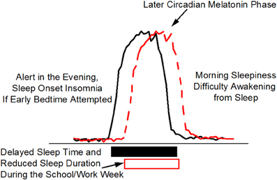 Frontiers | Circadian and wakefulness-sleep modulation of cognition