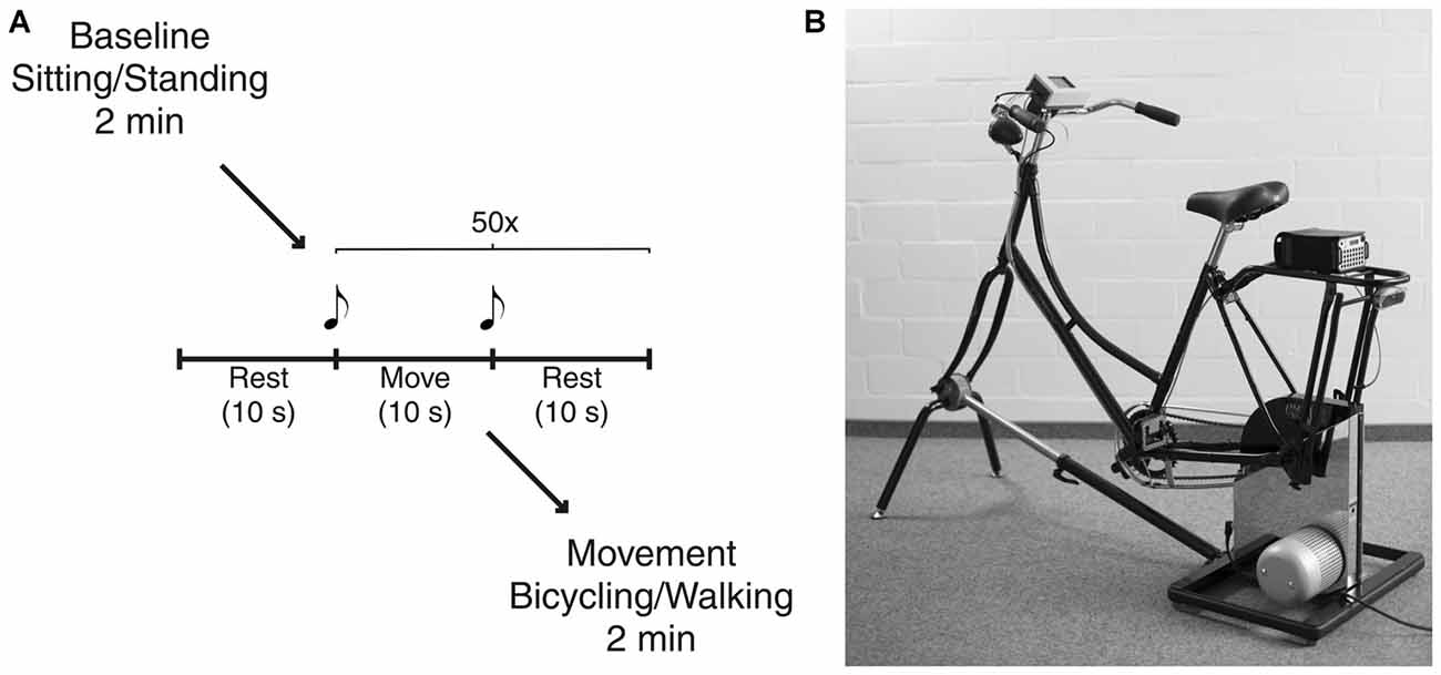 Frontiers | Bicycling and Walking are Associated with