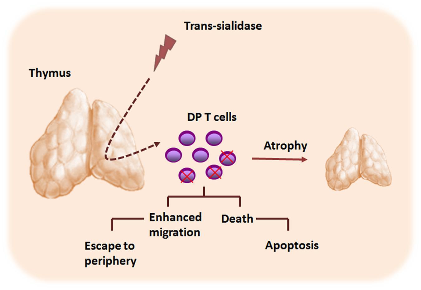 The Fabry Disease
