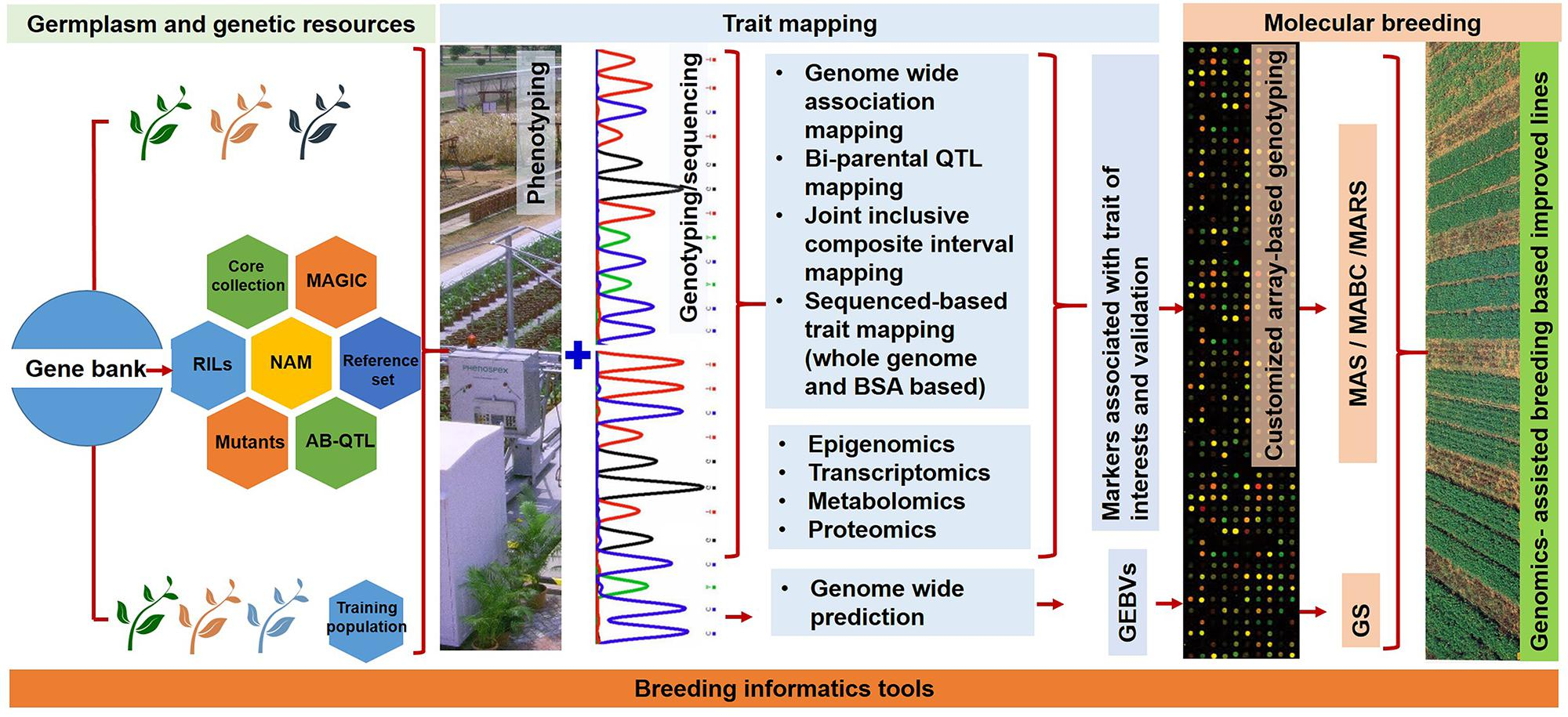 Frontiers | Emerging Genomic Tools for Legume Breeding ... on gene editing, gene concept map, gene technology, gene identification, gene testing, gene science, gene cloning, gene biology, gene drawing, gene linkage,