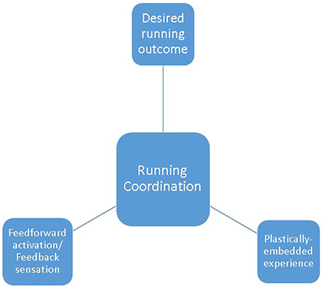 Frontiers | Uniqueness of Human Running Coordination: The