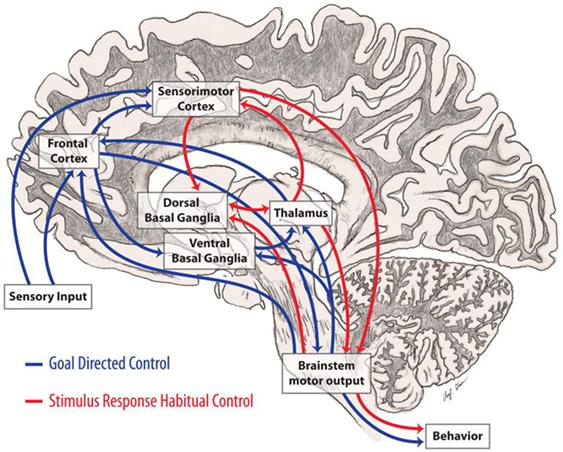 dopamine parkinson