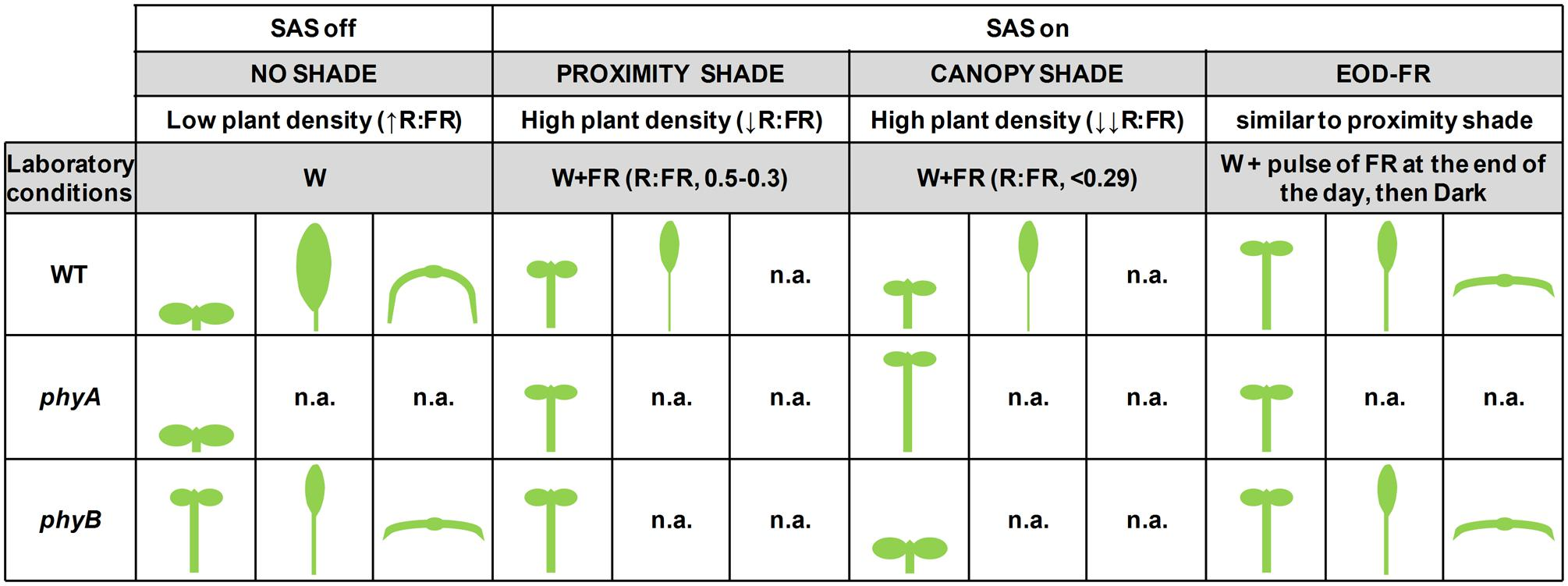 Frontiers plant responses to vegetation proximity a whole life frontiersin pooptronica Gallery