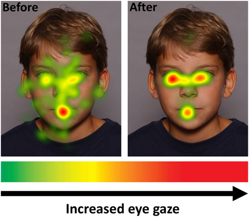 Figure 4 - By using special cameras, eyetracker machines can record exactly where people are looking when they look at faces on a computer screen.