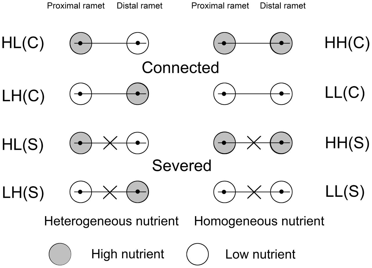 Frontiers roles of clonal integration in both for Soil homogeneous or heterogeneous